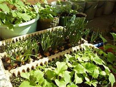 Выращиваем огород на балконе и хобби и